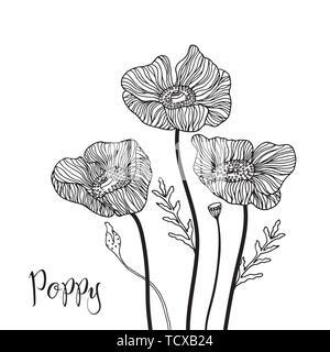 Fleurs de pavot dessiné à la main. Doodle style. Fleur de pavot vecteur d'éléments de contour noir fleur de pavot pour la conception d'Invitation de mariage, carte de Vœux. Banque D'Images
