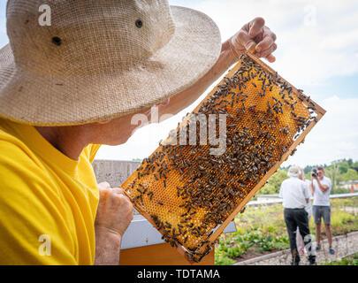 18 juin 2019, Hessen, Frankfurt/Main: Apiculteur Antonio Guerliaccio se tient sur un toit-terrasse de la Frankfurt School of Finance & Management et est titulaire d'un nid avec de jeunes abeilles dans ses mains. Depuis le printemps de 2018, cinq colonies d'abeilles vivent sur la terrasse nord du bâtiment et la production de miel. Photo: Frank Rumpenhorst/dpa Banque D'Images