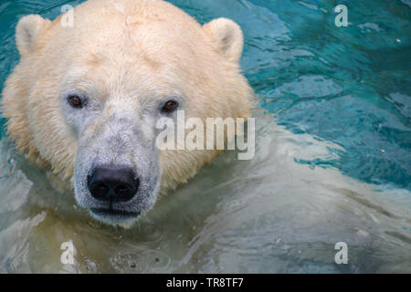 Un ours jouant dans l'eau Banque D'Images