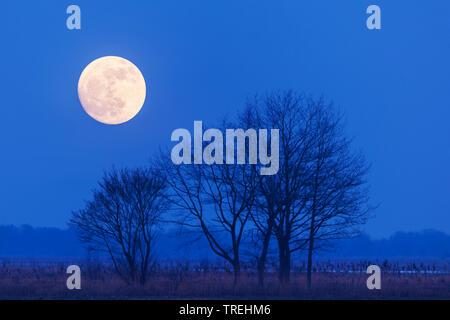 Pleine lune sur le lac Duemmer, ALLEMAGNE, Basse-Saxe Oldenburger Muensterland, Duemmerlohhausen Banque D'Images