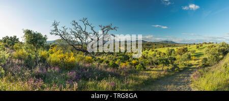 Les couleurs de début de l'été dans les domaines de la Beira Baixa, près de Penamacor, Castelo Branco, Portugal. Banque D'Images