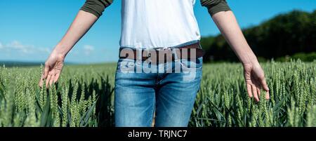 Femme en marche ses mains à travers le mûrissement du blé dans un champ, Close up. Banque D'Images