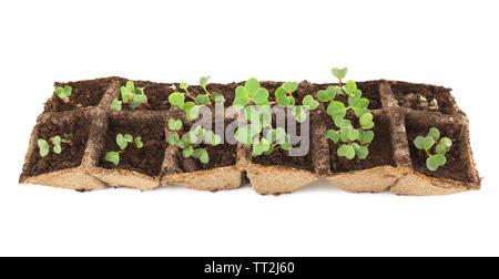 Les jeunes plants de radis dans le bac isolated on white Banque D'Images