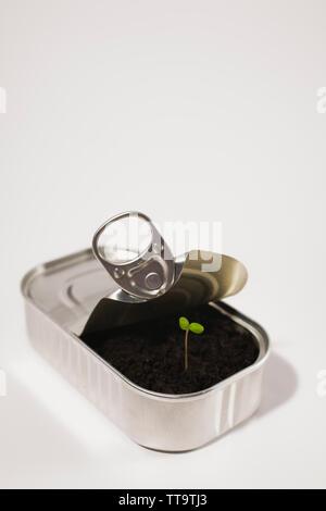 Nouvelles des semis d'arbres à travers le sol dans un peut de sardine Banque D'Images