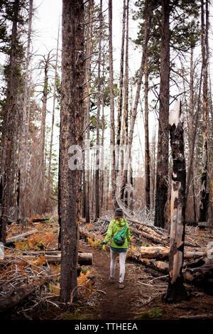 Vue arrière du femme marche sur chemin au milieu d'arbres en forêt