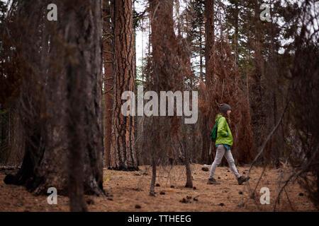 Vue de côté femme marche au milieu d'arbres en forêt