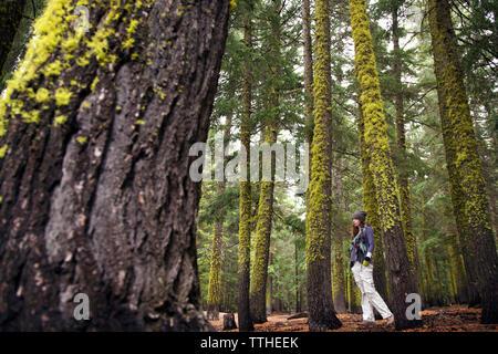 Low angle view of woman walking au milieu d'arbres en forêt