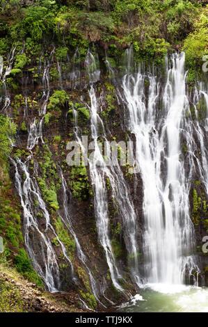 Vue sur la forêt en cascade Banque D'Images