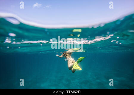 La section basse de woman swimming in underwater Banque D'Images