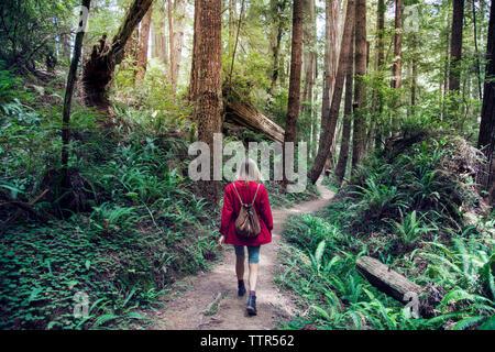 Vue arrière du femme marche sur route au milieu d'arbres en forêt