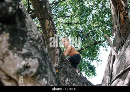 Low angle view of shirtless boy climbing tree at park Banque D'Images