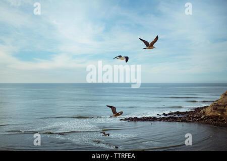 Vol de mouettes au-dessus de la mer contre le ciel Banque D'Images