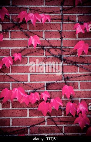Close-up de l'automne laisse sur mur de brique Banque D'Images
