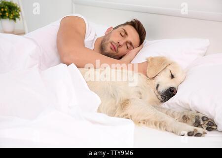 Couchage chien labrador avec le propriétaire au lit Banque D'Images