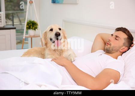 Chien Labrador avec coin couchage dans le lit du propriétaire Banque D'Images