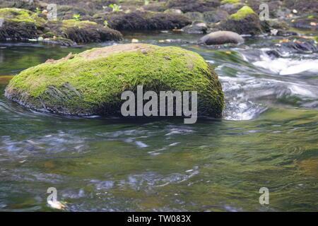 Rochers dans la rivière Dart passant par Hembury Woods sur une fin d'après-midi d'été. Ashburton, Dartmoor, Devon, UK. Banque D'Images