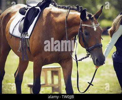 Girl rider mène une patte Bay horse, vêtus de munitions pour le dressage et les sports équestres, sur une journée ensoleillée Banque D'Images
