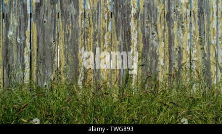 Libre à base de clôture en bois recouvert de lichen jaune avec un peu de plus en plus d'herbe verte au bas- fond et texture Banque D'Images
