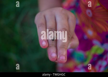 Petite fille jouant dans champ de riz. et certains insectes ont l'atterrissage sur sa main. Galerie d'images haute résolution.