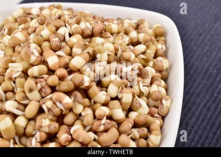 Sprouts in bowl, macro image des pousses, les graines germées Mung-9l Banque D'Images