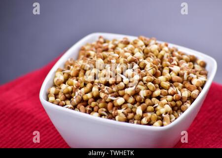 Sprouts in bowl, macro image des pousses, les graines germées Mung Banque D'Images