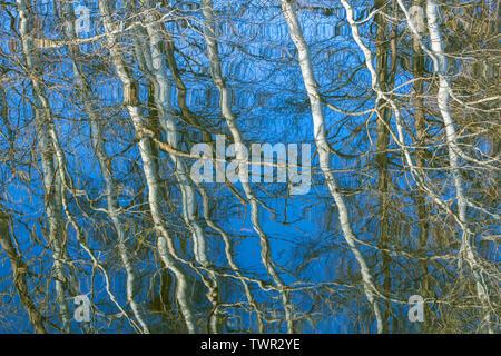 Réflexions de la forêt dans un étang, le printemps, l'Est des États-Unis, par Dominique Braud/Dembinsky Assoc Photo