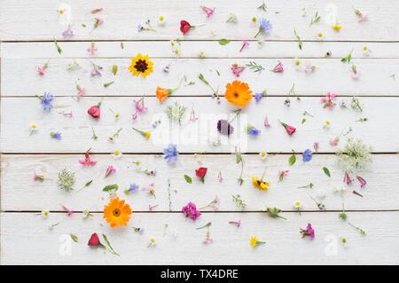 Fleurs d'été fleurs sur bois blanc Banque D'Images