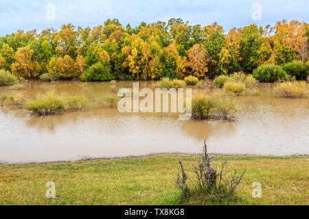 Couleurs d'automne sur les rives
