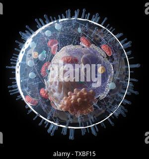 Médicalement en rendu 3d illustration de l'exacte de l'anatomie cellulaire Banque D'Images