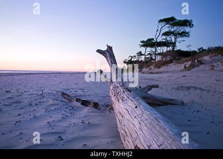 Géographie / Voyage, Allemagne, Mecklenburg-Ouest Pomerania, à la plage occidentale à Prerow, péninsule de Fischla, Additional-Rights-Clearance-Info-not-available