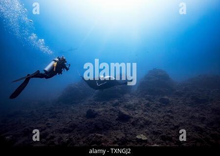 Plongeur femelle géant tournage Oceanic Manta Ray, deux marteaux festonnés en arrière-plan, Îles Revillagigedo, Socorro, Baja California, Mexique Banque D'Images