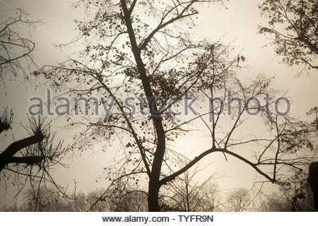 Bel arbre silhouette contre un ciel du matin brumeux à la fin de l'automne. Banque D'Images