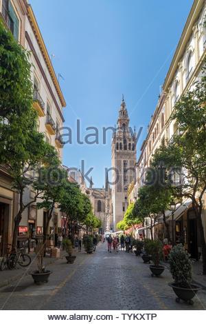 Vue vers le bas une rue piétonne bordée de jeunes arbres et plantes en pot pour la Giralda, Séville, Andalousie, Espagne Banque D'Images