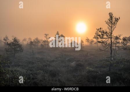 Vue panoramique de marécage à wooden path au matin d'automne dans le parc national de Torronsuo, Finlande Banque D'Images