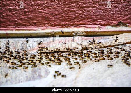Beaucoup de noir de l'armée de fourmis marcher dans la ligne sur plancher de béton.