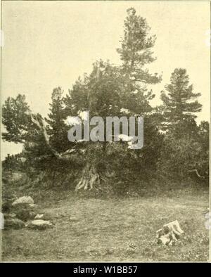 Image d'archive à partir de la page 358 de l'Arve die in der Schweiz
