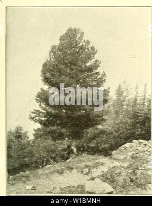 Image d'archive à partir de la page 430 de l'Arve die in der Schweiz