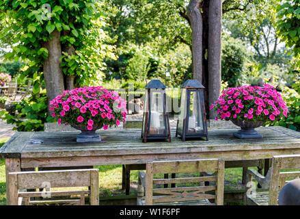 Table en bois avec chaises avec des vases avec de beaux pétunias et lampes en métal dans un jardin anglais avec verdure et arbres Banque D'Images