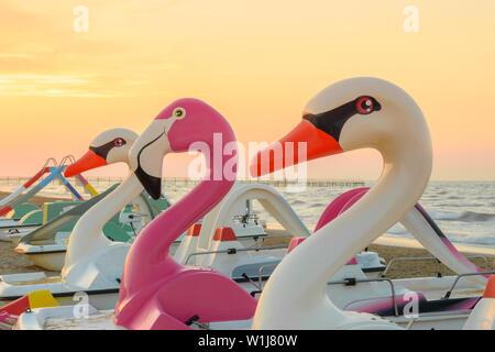 Flamand Rose et swan bird de l'eau forme des bateaux sur la plage de Rimini italien illuminée par le jaune et l'orange ciel du soir Banque D'Images