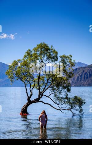 Un jeune visiteur quitte à l'icône 'arbre isolé' dans le lac, le lac Wanaka, Région de l'Otago, île du Sud, Nouvelle-Zélande Banque D'Images