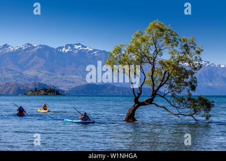 Les gens autour de l'emblématique 'Kayak Lone Tree' dans le lac, le lac Wanaka, Région de l'Otago, île du Sud, Nouvelle-Zélande Banque D'Images