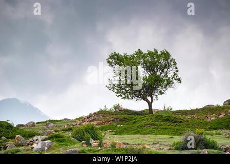 Lonely tree pousse sur des pentes rocheuses en montagne nuageux Banque D'Images