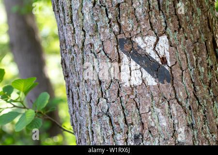 Signe sur le sentier de randonnée en forêt arbre Banque D'Images