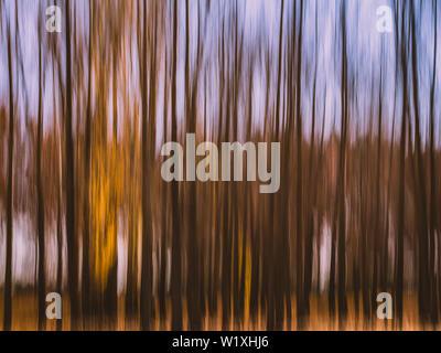 Mouvement de caméra intentionnelle (ICM) de la photographie sur un matin d'automne dans les bois. Banque D'Images