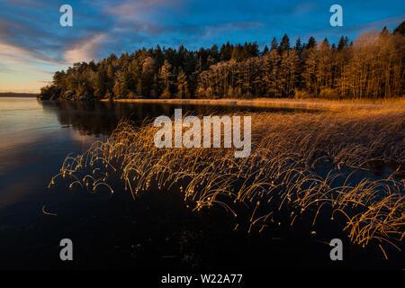 Au début de l'hiver matin à Hvalbukt dans le lac Vansjø en Østfold, Norvège. Vansjø est une partie de l'eau appelé système Morsavassdraget. Banque D'Images