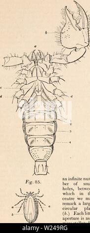 Image d'archive à partir de la page 220 de la cyclopaedia d'anatomie et de Banque D'Images
