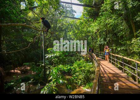 Parque das Aves (parc des oiseaux), Iguacu Falls, État du Parana, Brésil Banque D'Images