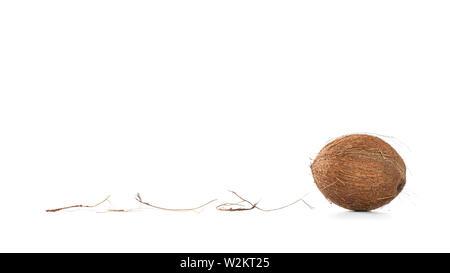 Noix de coco sur fond blanc, avec copie espace pour le texte Banque D'Images