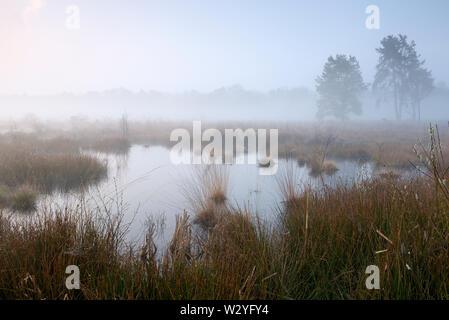 Moor, tôt le matin, d'avril, Haaksbergerveen, Haaksbergen, Overijssel, Pays-Bas Banque D'Images