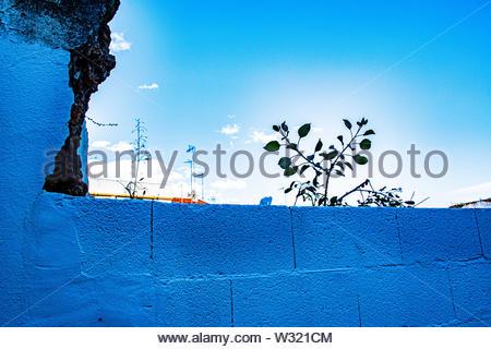 Briques bleu petite plante et beaucoup de sky Banque D'Images